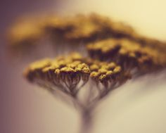 """""""Yellow Spring Floral"""" print from dullbluelight via Etsy - Truly amazing macro work, go check it out!"""