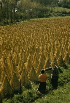 A couple chats beside vast rows of stacked flax drying in a field-St. Samson la Poterie, Normandy, France  ~by Howell Walker