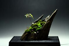 Bonsai-Art: Landscape-Layout by Kashiko It`s astonishing how beautiful simple, little things can be!