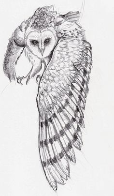 Interest tattoo ideas and design - Barn Owl In Flight Tattoo Sketch Photo - 5. If you want to make a tattoo, look how it looks from other people!