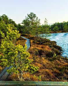 24 Pictures That Will Make You Fall in Love with Estonia's National Parks