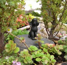 Small Miniature Garden