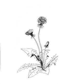 tegninger af planter - Google-søgning