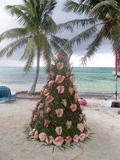 Conch Christmas Tree ~ Tranquility Resort, Belize