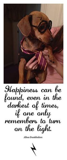 Everything About The Cute Dachshund Puppy Health Dachshund Funny, Dachshund Quotes, Dachshund Love, Brown Dachshund, Dachshund Rescue, Pet Health Insurance, Best Pet Insurance, Puppy Care, Dog Care