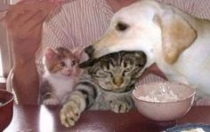 fun dog and cat eating