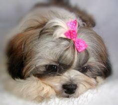 "my baby girl, Francine Laure           ""My little dog, a heartbeat at my feet.""  -Edith Wharton"