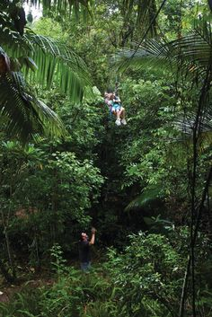 Finch Hatton Gorge Camping #thisisqueensland #seeaustralia #travel2next
