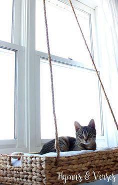 DIY Hanging Basket Cat Perch   Hometalk
