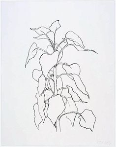 Sunflower II. Ellsworth Kelly.