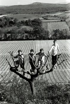 Ferdinando Scianna  France, Village of Pauligne. 1994.  Boys on a tree.