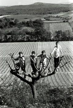 Ferdinando Scianna France, Village of Pauligne. 1994. Boys on a tree.