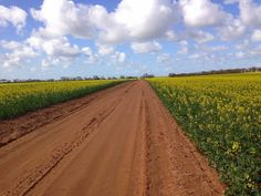 Here's a Canola view to complete your weekend! Crop Farming, Carbon Cycle, Dirt Track, Cool Wallpaper, Country Roads, Sky, Wallpapers, Blue, Heaven