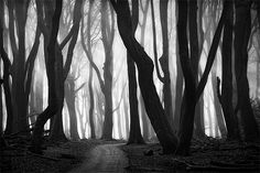 Creepy Scary Tree | 40+ Forest Photography That Will Give You The Spook | Naldz Graphics