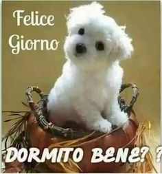 it Buongiorno Italian Phrases, Italian Quotes, Good Morning Good Night, Good Morning Quotes, Friends Forever, Best Friends, Sushi Cat, Italian Life, Funny Images