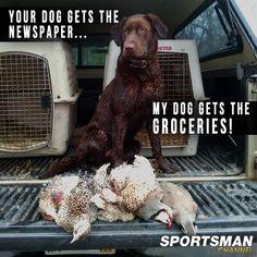 Hunting Dog..