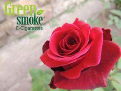 roze Love Images, True Love, Bloom, Rose, Green, Flowers, Plants, Writer, Beautiful