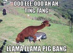 a-llama-having-sex-with-a-pig.jpg 620×454 pixels
