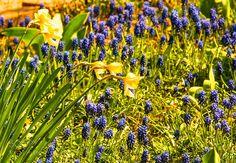 Flowers by AndreyGlushenko #nature #mothernature #travel #traveling #vacation #visiting #trip #holiday #tourism #tourist #photooftheday #amazing #picoftheday