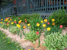 This Spring In Our Zone 5 Climate Has Been Typically Wet And Cool With  Temperatures Usually In The And The Perennials Seem To Love.
