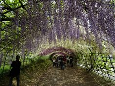 Kawachi Fuji Garden, Kitakyushu, Japan