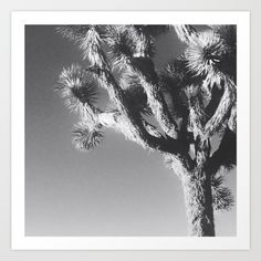 Joshua Tree National Park, 2016. The iconic Joshua Trees dot the landscape of Mojave desert in Joshua Tree, California.<br/> <br/> Photograph by Barbara Smith, 2016.<br/> <br/> Nature, Photography, Tree, National Park, Black & White, California, Joshua Tree.