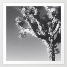 Joshua Tree National Park, 2016. The iconic Joshua Trees dot the landscape of Mojave desert in Joshua Tree, California.<br/> <br/> Photograph by Barbara Smith, 2016.<br/> <br/> Nature, Photography, Tree, National Park, Black & White, California, Joshua Tree.