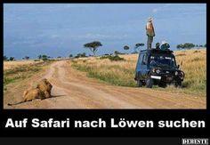 Auf Safari nach Löwen suchen..