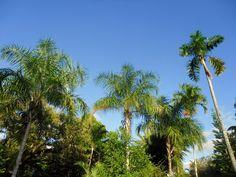 Fairchild tropical garden Miami  #florida