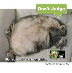 CYA ! Amused Animal | Create your itinerary in 3 easy steps ! Go to www.myezplan.com & discover - Best things to do in Freeport |  #cute #pets #naturelover #farm #animallovers #myezplan