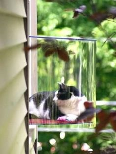 Cat Window, 20 awesome things for cool cats. Crazy Cat Lady, Crazy Cats, I Love Cats, Cool Cats, Animal Gato, Gatos Cats, Here Kitty Kitty, Fat Kitty, Cat Furniture