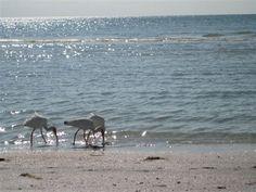 Condo vacation rental in Seagrape Village from VRBO.com! #vacation #rental #travel #vrbo