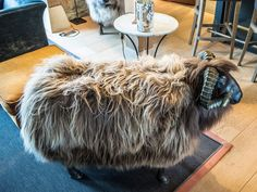 Thyme in the Cotswolds - a sheep seat! Yes... a seat that is made to look like a sheep with sheepskin and all and it's wickedly comfortable! Perfect for the living room in the country house.