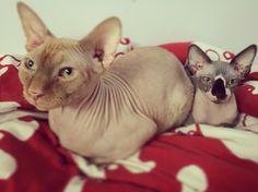 Buba and Yogi