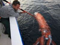 A giant squid caught by fisherman, still has color to him and intact! scary to think they actually exist. I read the article on yahoo.