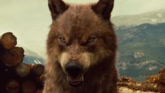 jacob as awolf   For Erly Ayustyana this is Jacob Black   RK.