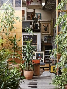 Incredible collection of indoor plants. The Annandale warehouse home of artist James Powditch, his partner Diane Adair and family. Indoor Garden, Indoor Plants, Home And Garden, Indoor Courtyard, Internal Courtyard, Outdoor Spaces, Outdoor Living, Warehouse Home, Deco Nature