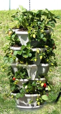 Mr Stacky 5 Tiered Hanging and Stacking Indoor Outdoor Vertical Strawberry Planter - Learn How to Grow Organic Strawberries Easy with These Stone Plastic Containers - Great Garden Planting Pots - Planters Also Used for Herbs Peppers Flowers Tomatoes Succulents Green Beans - Free Growing Gardening Plant Tips