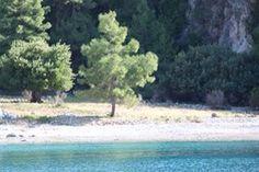 Bacardi Bay, Dalyan,Fethiye,Muğla, Turkey