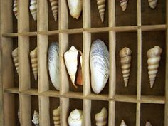 Gold Shoe Girl: Printer's Drawer with Seashells
