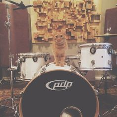 I seriously just came home from work to this…Daphne is like a little cartoon character. #pdp #drums #pacificdrums #drummer #vscocam #d...