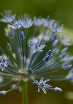 Soft Blue~