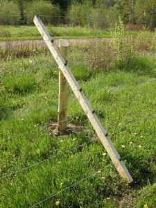 1000 Images About Deer Fencing On Pinterest Deer Fence