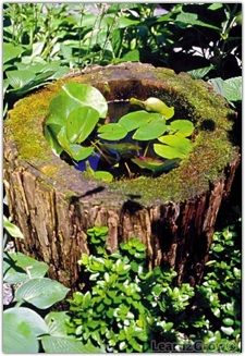 Water features can be big or small. Here, an old stump was hollowed and lined to create a planting basin in a woodland garden