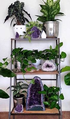 Pairing Plants and Crystals: A crystal and plant combo is a decorative pair that you didn't know your house needed.Improve the energy and flow in your home or workspace by combining crystals andplants