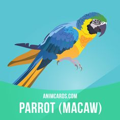 Macaws are native to the jungles of Central and South America. They usually mate for life. Some species of macaws can even mimic human speech.  #english #englishlanguage #learnenglish #studyenglish #language #vocabulary #dictionary #englishlearning #vocab #animals #macaws #macaw #parrot #parrots #bird #birds