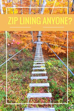 Zip Lining Anyone? Head to the Adventure Park at the Discovery Museum in Bridgeport, CT.