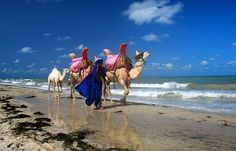 When desert meets the sea, Djerba ,Tunisia  I want to ride a camel on the beach some day!!!