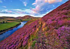 Tour della Scozia: 7 notti tra Edimburgo, Loch Ness, Oban in buone strutture + volo e auto da soli 268€