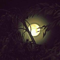 Moonlight confession